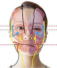 図:経絡・顔のゆがみ