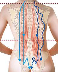 図:経絡・体のゆがみ
