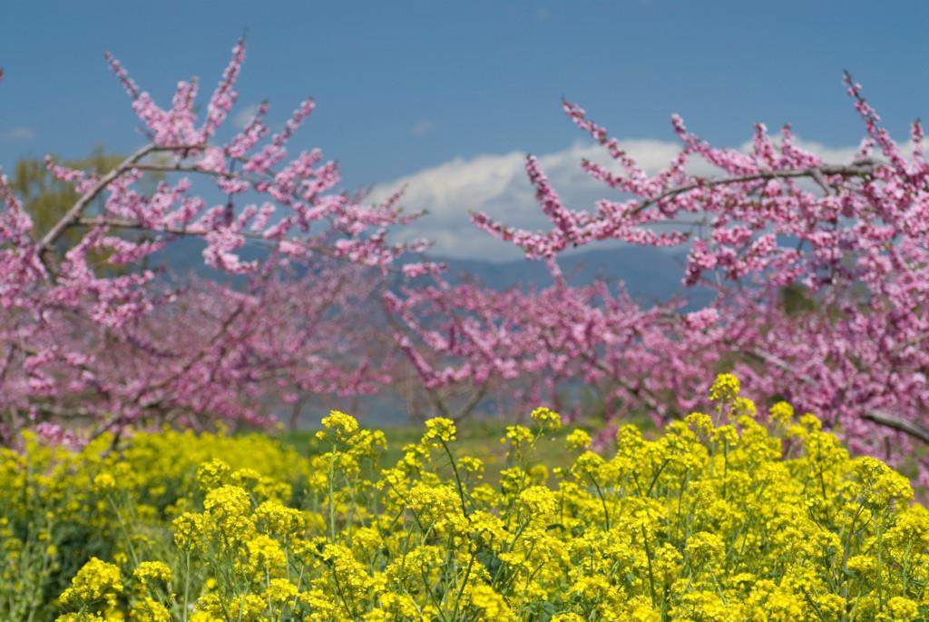 春先イメージ画像