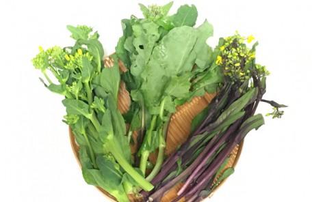 春先が旬の野菜